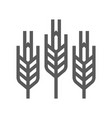 cereals wheat line icon vector image vector image