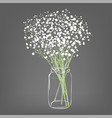white flowers bouquet gypsophila flowers vector image