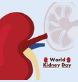 world kidney day awareness disease care vector image