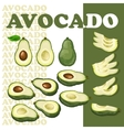 Avocado and slices isolated on white background vector image