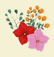geranium flower decorative image vector image