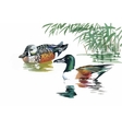 Geese flock swimming on pond watercolor vector image vector image