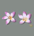 isolated tropical flowers plumeria image vector image