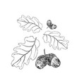 oak branch with leaves in black ink art vector image