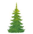 one tall spruce tree isolated vector image vector image