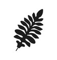 tropical palm monstera leave jungle vector image vector image