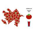 azerbaijan map composition of tomato vector image vector image