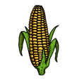 ear corn in engraving style design element vector image vector image