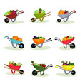 flat set of garden wheelbarrows full of vector image vector image