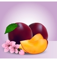 whole ripe plums fruit vector image