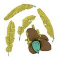 set of stylized banana leaves decorative image vector image