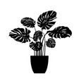 monstera potted plant silhouette vector image