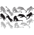 Set of leopard on a white background vector image vector image