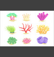 underwater plants set seaweeds and aquatic marine vector image