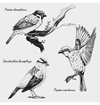 hand drawn realistic bird sketch graphic vector image vector image
