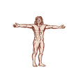 Vitruvian Man Arms Spread Front Etching vector image vector image
