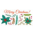 winter plants for christmas or new year vector image