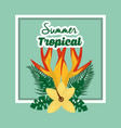 summer tropical season vector image