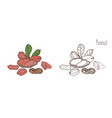 colored and monochrome drawings of peanut in shell vector image vector image