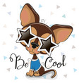 cute chihuahua with sun glasses in shape of vector image
