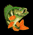 eurasian river yellow perch fishbass fishing logo vector image