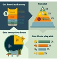 flat cats life infographic vector image vector image