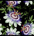 passionflower tropical flowers and fruit vector image