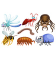 Set of different types of bugs vector image vector image