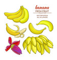 banana fruits set vector image