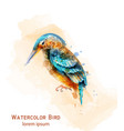 kingfisher bird watercolor colorful tropic vector image vector image