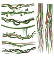 tropical liana branches stems vines set jungle vector image