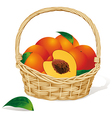 basket of peaches vector image vector image