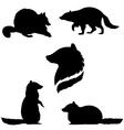 raccoonSet vector image