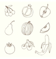 Sketches of fruit vector image vector image