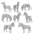 zebras sketches equine mammals with stripes fur vector image
