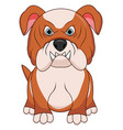 angry bulldog dog cartoon vector image