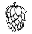 beer hop on white background design element for vector image vector image