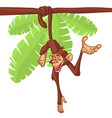 cartoon cute monkey chimpanzee hanging vector image vector image