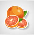 grapefruit sticker cartoon vector image