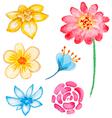 Set of watercolor floral elements vector image vector image