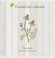 chamomile essential oil label vector image vector image
