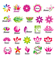 Collection of multicolored floral logos vector image
