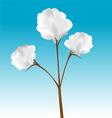cotton plant vector image vector image