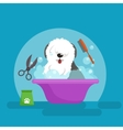 Dog hair hygiene Set Pet vector image