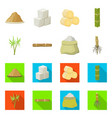 isolated object tropical and produce symbol vector image vector image