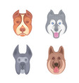 set dogs for set vector image vector image