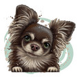 chihuahua dog wall sticker vector image vector image