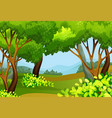 forest scene with tall trees vector image vector image
