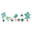 house plants home decor set vector image