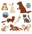 pets cartoon characters flat animal icons vector image